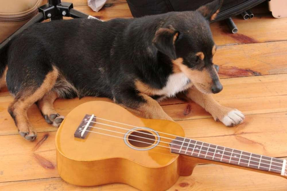 pies woodstock ukulele